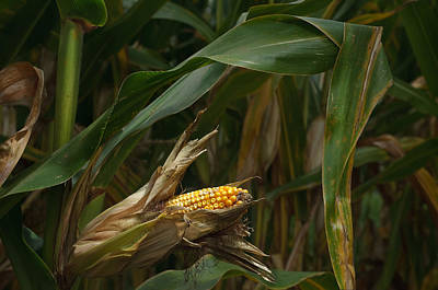 Midwest Harvest Original by Steve Gadomski