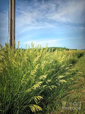 Photograph - Midwest Wild Grass by Luther Fine Art