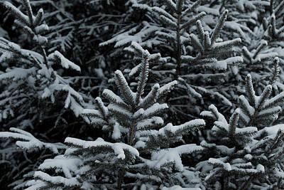 Photograph - Midwinter Snow by Steve Gravano