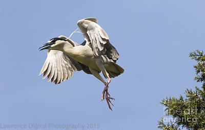 Photograph - Might As Well Jump by Ursula Lawrence