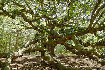 Photograph - Mighty Angel Oak by Jennifer White