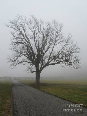 Photograph - Mighty Bur Oak On A Foggy Day by Barbara McMahon