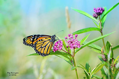 Photograph - Mighty Monarch by Peg Runyan