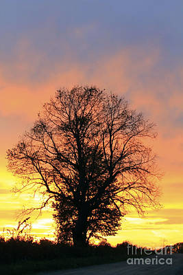Photograph - Mighty Oak At Sunset by Kathy DesJardins