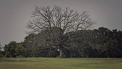 Photograph - Mighty Oak Past Its Time by Philip A Swiderski Jr