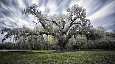 Mighty Oak Original by Robert Fawcett