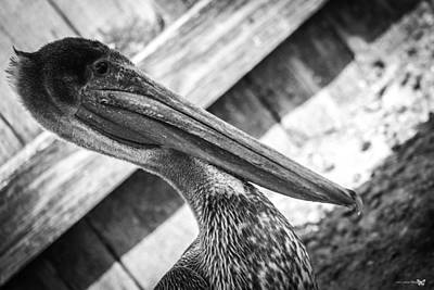 Photograph - Mighty Pelican  by Debra Forand