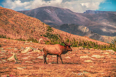 Photograph - Mighty Rocky Mountain Elk by Dan Sproul