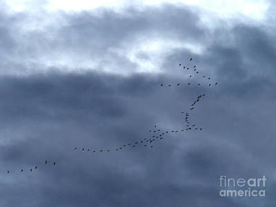 Photograph - Southbound Geese by Phil Banks