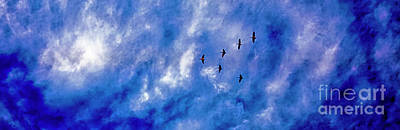 Photograph -  Migrating Geese  by Tom Jelen