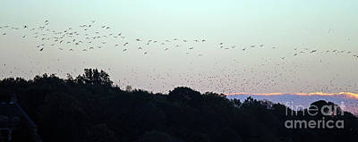 Migration Flyway Print by Steve Gass