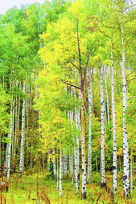 Photograph - Miguel County Colorado Fall Colors by Victor Culpepper