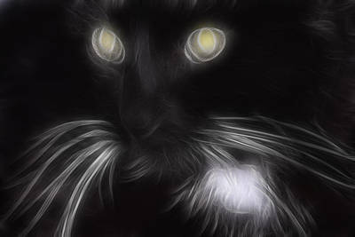 Pet Portraits Digital Art - Mikey by Holly Ethan