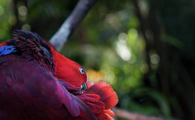 Art Print featuring the photograph Miksang 4 Parrot by Theresa Tahara