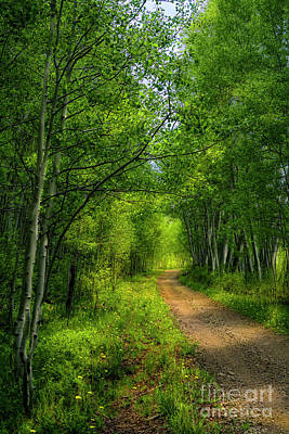 Photograph - Miles Of Green by The Forests Edge Photography - Diane Sandoval