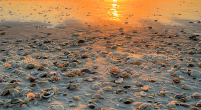 Photograph - Miles Of Shells In Saint Joe State Park by JC Findley