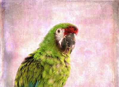 Macaw Digital Art - Military Macaw by Victoria Harrington