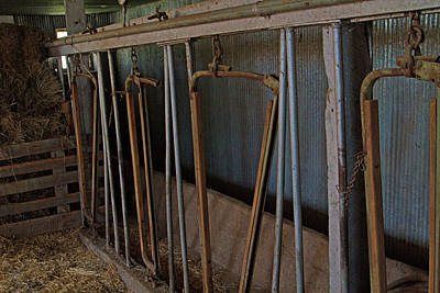 Photograph - Milk Barn Stanchions by Alana Thrower