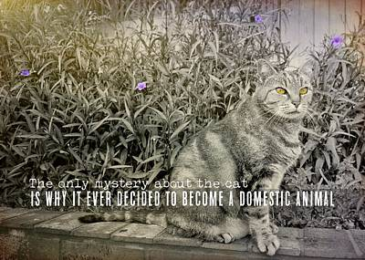 Cat Photograph - Milk For The Cat Quote by JAMART Photography