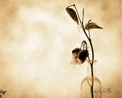 Glass Art Photograph - Milk Weed In A Bottle by Bob Orsillo