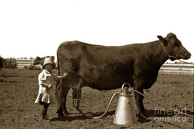 Photograph - Milking Cows Early Milking Machine 1910 by California Views Mr Pat Hathaway Archives