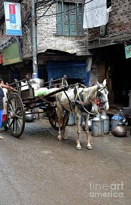 Photograph - Milkman Delivers Fresh Milk On Horse Carriage In Walled City Lahore Pakistan by Imran Ahmed