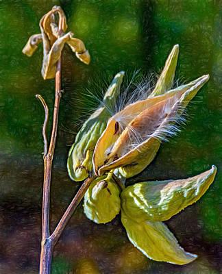 Weed Digital Art - Milkweed 3 - Paint by Steve Harrington