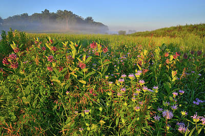Photograph - Milkweed And Mints At Sunrise In Glacial Park by Ray Mathis