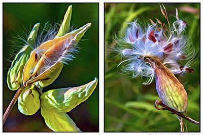 Milkweed Photograph - Milkweed Diptych - Paint by Steve Harrington