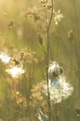 Photograph - Milkweed In Afternoon Sun Color Portrait by Joni Eskridge