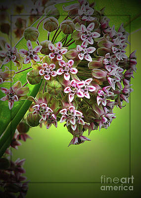 Milkweed In Bloom Art Print by Deborah Johnson