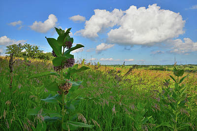 Photograph - Milkweed In Prairie Of Glacial Park by Ray Mathis