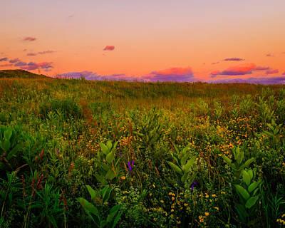 Photograph - Milkweed Meadow Twilight by Chris Bordeleau