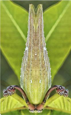 Photograph - Milkweed Pod Pareidolia by Constantine Gregory
