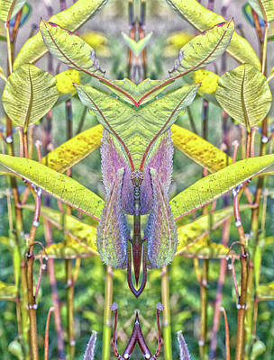 Photograph - Milkweed Pods Pareidolia by Constantine Gregory