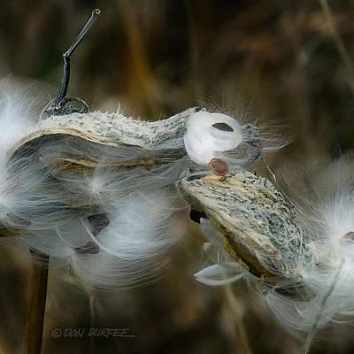 Photograph - Milkweed Seeds by Don Durfee