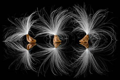 Preservation Photograph - Milkweed Seeds by Jim Hughes