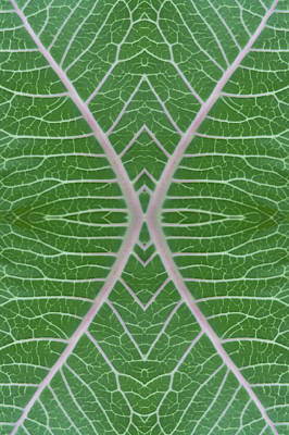 Photograph - Milkweed Veins Quad by Paul Rebmann