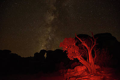 Photograph - Milky Way And Juniper by Kunal Mehra