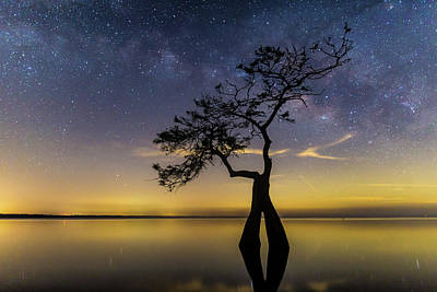 Photograph - Milky Way Cypress by Stefan Mazzola