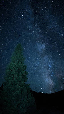 Photograph - Milky Way Illuminated Pine Great Basin National Park Nevada by Lawrence S Richardson Jr