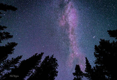 Photograph - Milky Way In The Trees by Phil Rispin