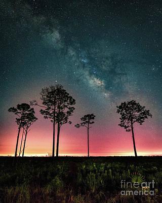 Photograph - Milky Way Over Myakka River State Park by Damon Powers