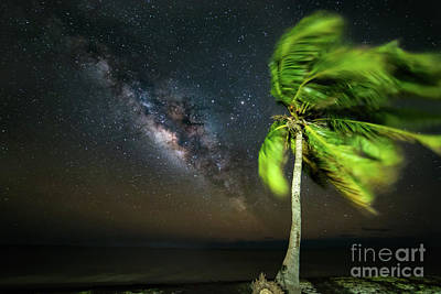 Winter Animals - Milky Way Over The Florida Keys by Mikeal Beland