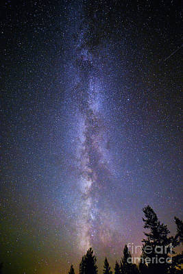 Photograph - Milky Way Over The Pines by Jean Hutchison