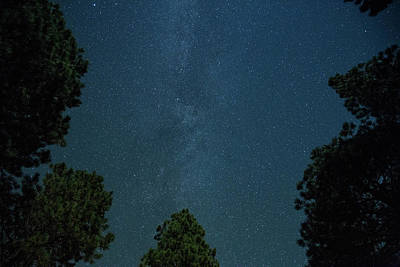 Photograph - Milky Way Over Trees by Kunal Mehra
