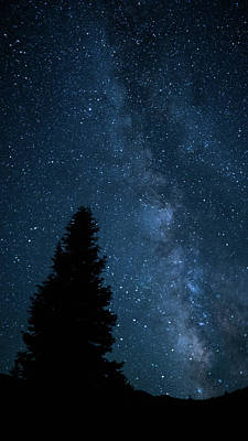 Photograph - Milky Way Pine Great Basin National Park Nevada by Lawrence S Richardson Jr