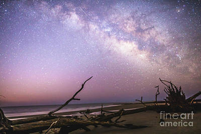 Photograph - Milky Way Roots by Robert Loe