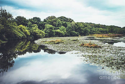 Photograph - Mill Pond by Colleen Kammerer