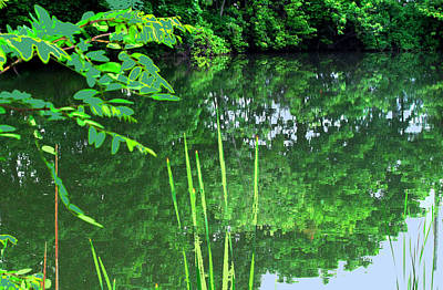 Photograph - Mill Pond Reflections by Ian  MacDonald
